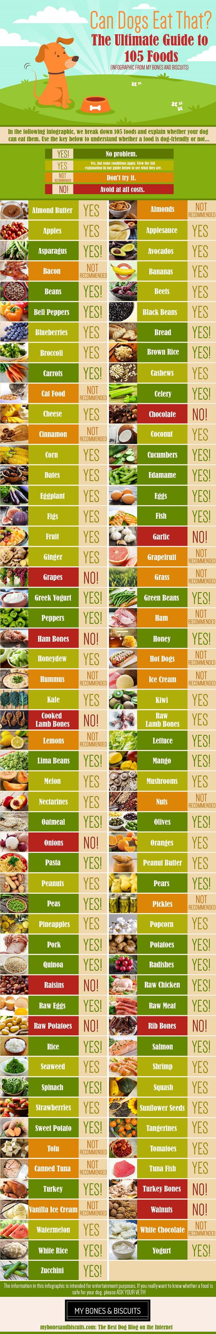 Can Dogs Eat This? EPIC Guide to 105 Foods | Apples Bananas Grapes Berries Watermelon | My Bones and Biscuits