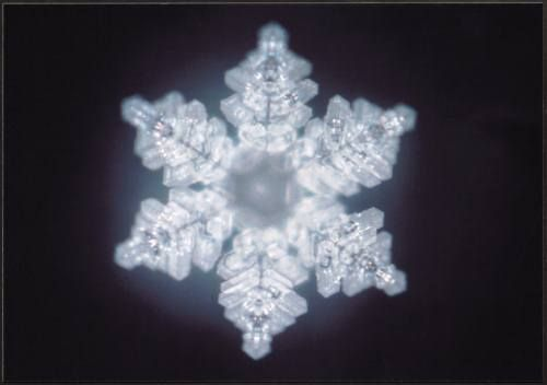Water crystals react to words. This one was impacted by the word Truth. Masaru Emoto