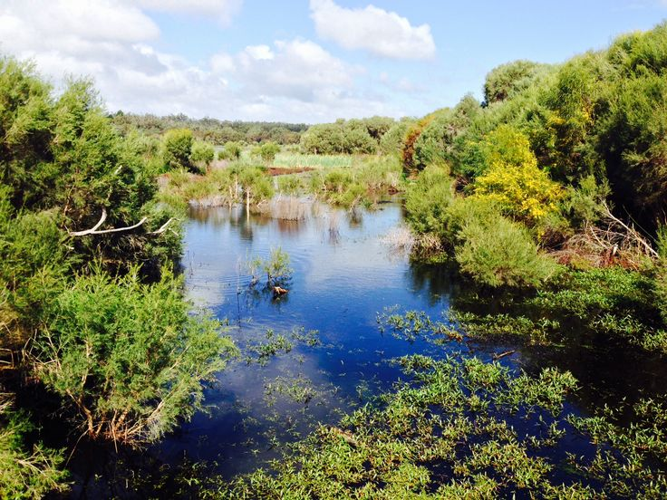 Water water everywhere, Yanchep National Park, Western Australia.