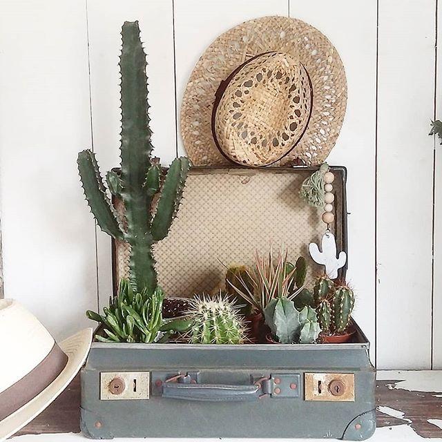 Finalement j'ai opté pour un tout autre contenant pour rassembler tous mes petits achats d' hier chez @jardineriestruffaut , la vieille valise de mon arrière grand - mère 😊 Ensemble elles seront plus fortes pour survivre à ma main verte 😂😃😉 . . Je vous souhaite un excellent appétit . . #cactus #chapeaudepaille #vieillevalise #green #photooftheday #tuesday #athome #instaplantation #picoftheday #instadecoration #brocante #succulent #plantes #verdures #botanique