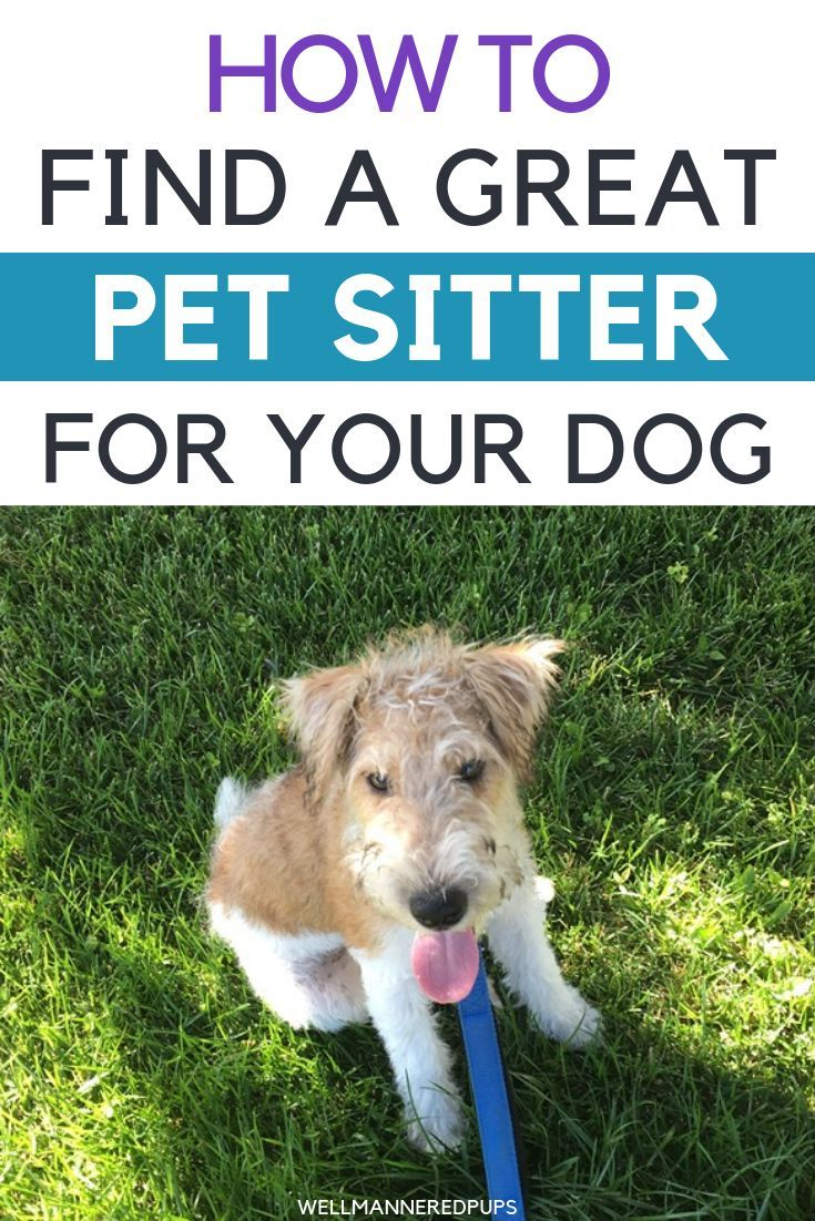 How To Find A Great Pet Sitter For Your Dog Dog Owners Dogs