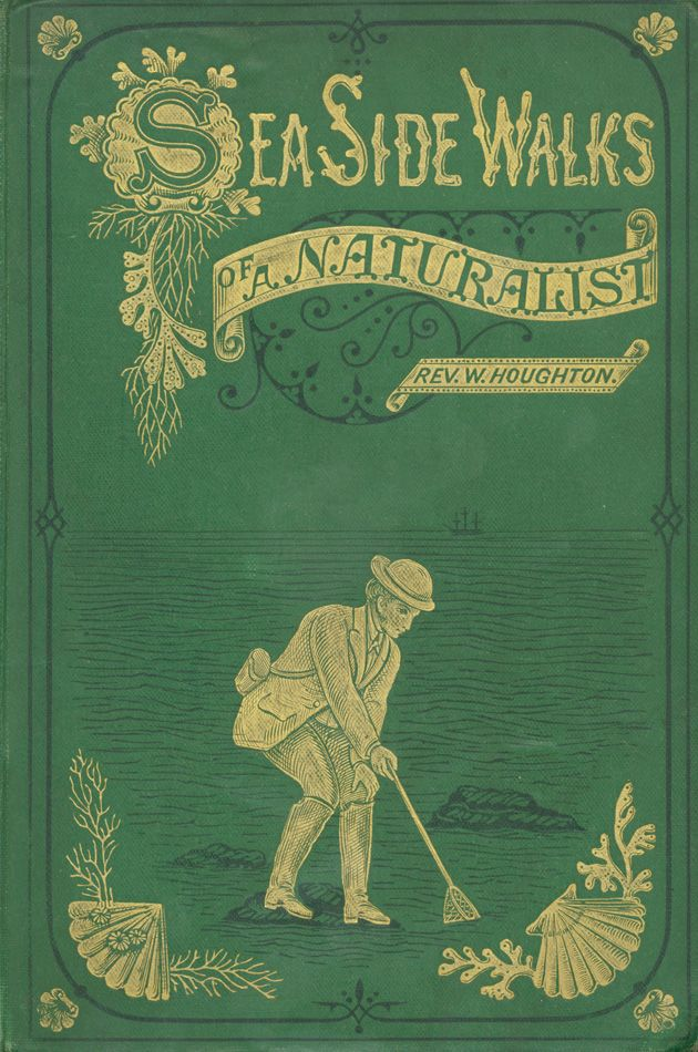 I love old books like this. Sea Side Walks of a Naturalist.