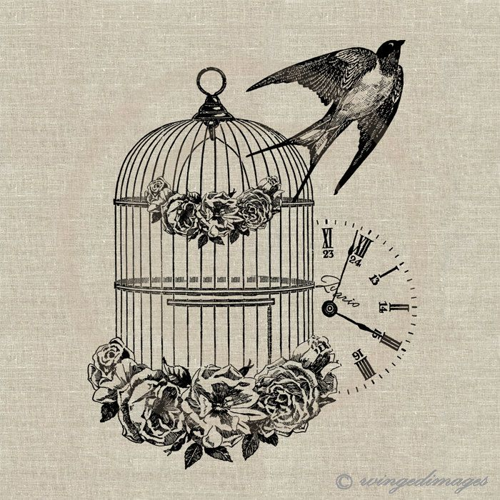 Antique bird cage drawing - photo#4
