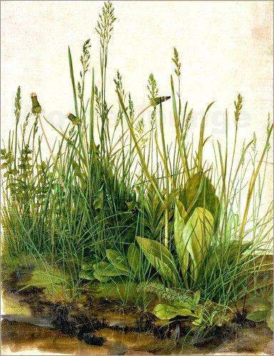 Albrecht Dürer   Das Grosse Rasenstück