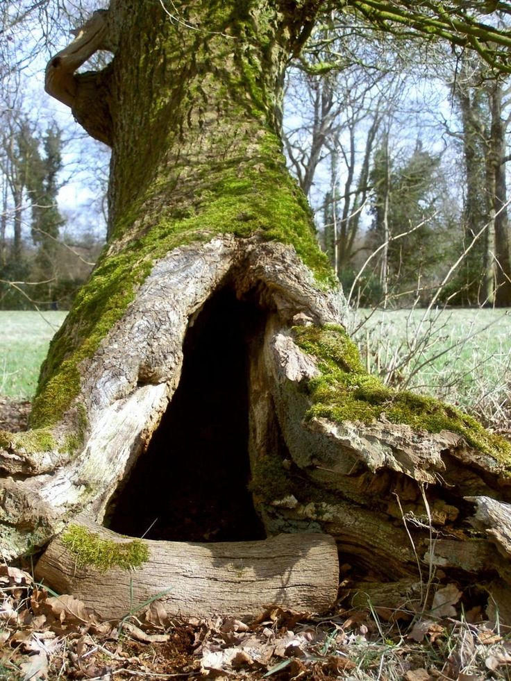 Faeries must live here!