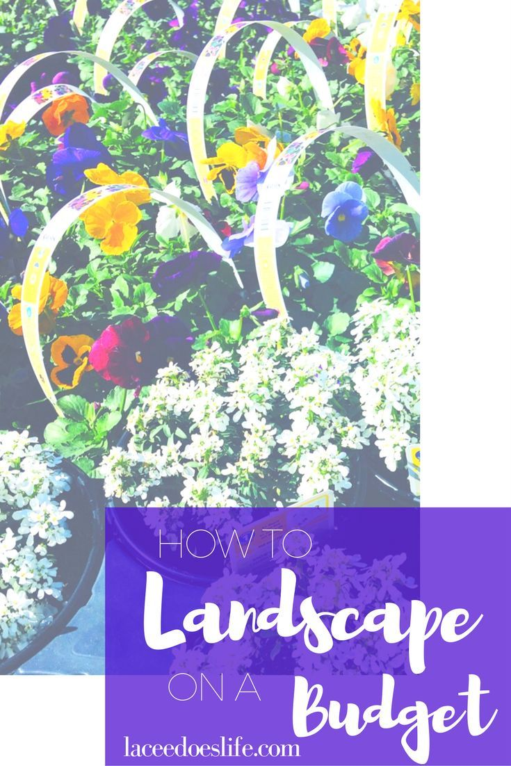 Landscaping on a Budget | Budget Tips | Step-by-Step | Landscaping Guide
