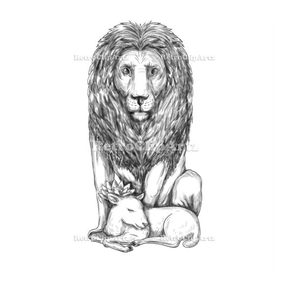 Lion Watching Over Lamb Tattoo Vector Stock Illustration.  Tattoo style illustration of a lion watching over a sleeping lamb viewed from front set on isolated white background. #illustration #LionWatchingOverLamb