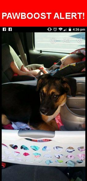 Please spread the word! Sadie was last seen in Evansville, IN 47714.    Nearest Address: Near Corregidor Cir & S Ruston Ave
