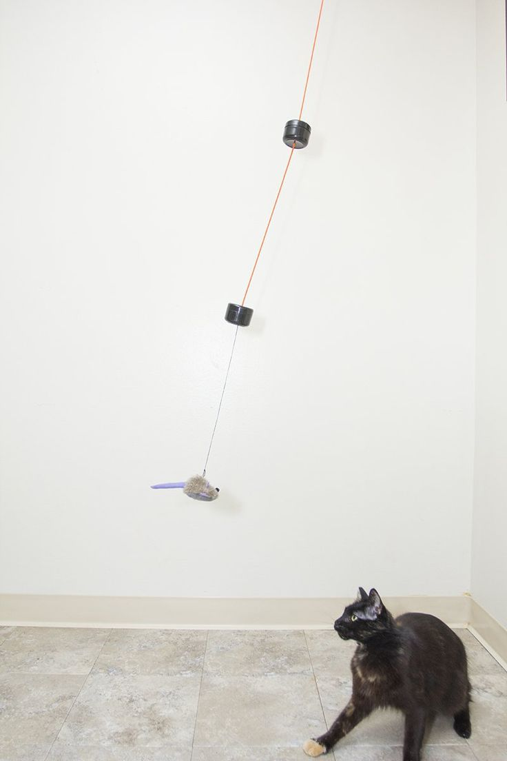 Build an unpredictable compound pendulum with two weights, a piece of string, and a fake mouse. Your cat will love you for it.