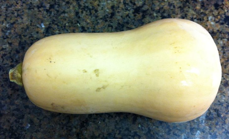 Squash Seeds - HONEYNUT - Mini Butternut Squash - NON GMO - 10 Seeds  #theseedhouse