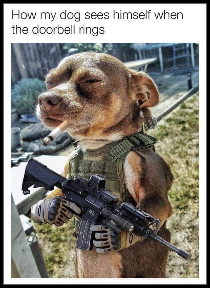 Pin by Kathyd on Chihuahua Love ️ in 2020 Dog memes