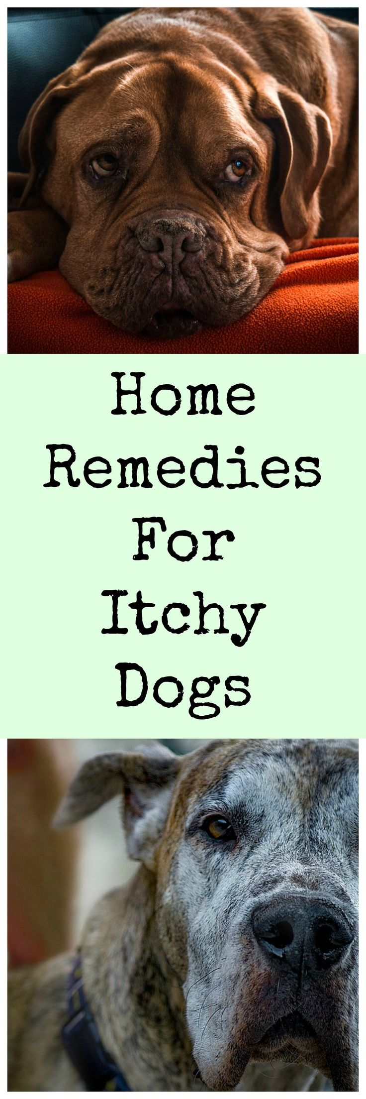 Home Remedies To Cure Uti In Dogs