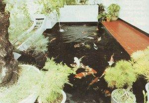 koi pond - kolam koi terbaik, desain kolam koi | kolam, desain