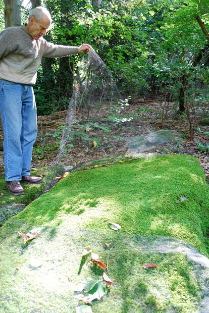 How To Grow Moss On A Recent Trip To Pennsylvania, I Was Fortunate Enough  To Visit The Moss Garden Of David Benner.
