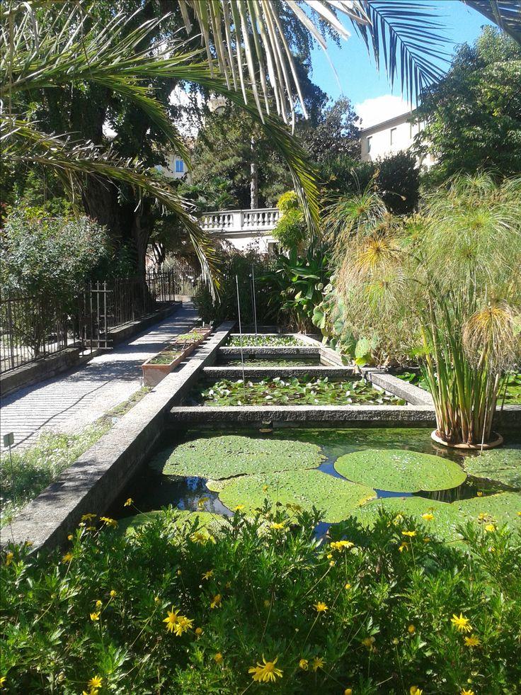 Padowa Botanica