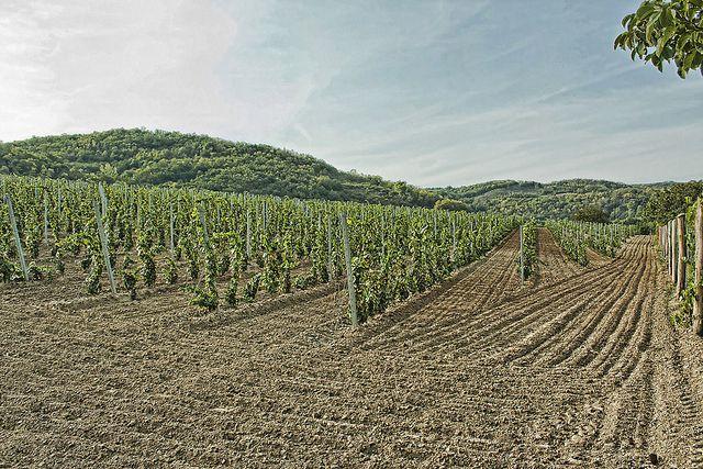 Vida Winery