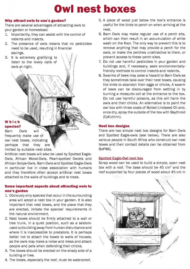 DIY: Build an Owl Nest Box. Learn more about how The SPCA helps wildlife at http://www.spcamc.org/wildlife/
