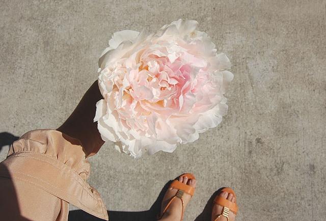 by montmarte: Brigittew, Sidewalks Treasure, Photo Ideas, Bloom Colors, Plants People, Montmart, Kafka, Big Flowers, Flower