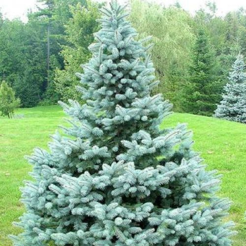 30 best images about plant wishlist on pinterest for Evergreen landscapes christchurch