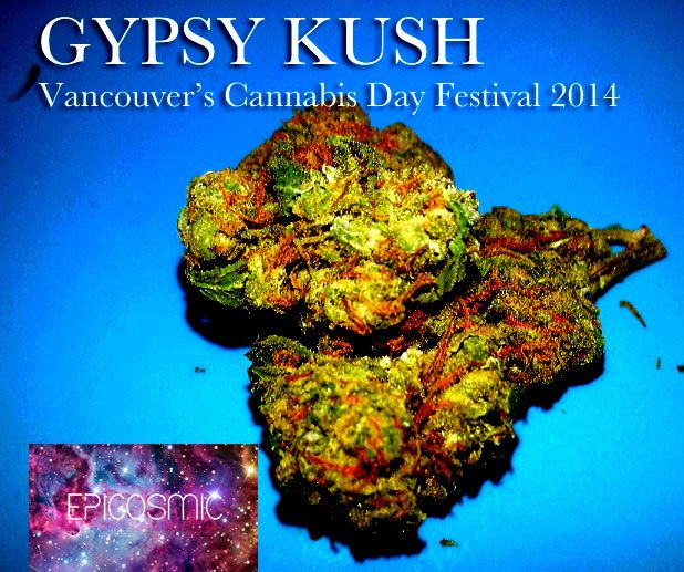 Gypsy Kush [Photography by EpiCosmic]