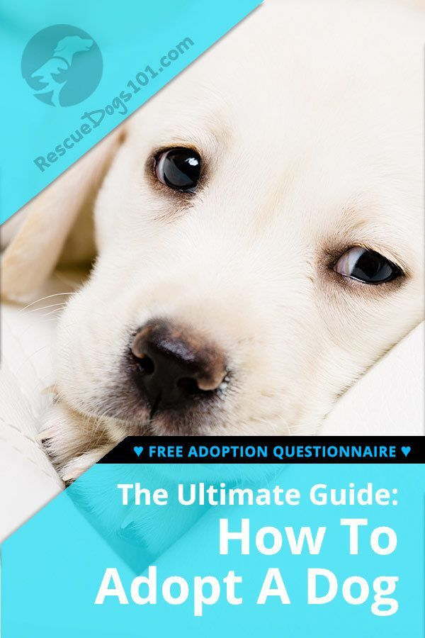 How To Adopt A Rescue Dog Your Step By Step Guide Dogs Rescue