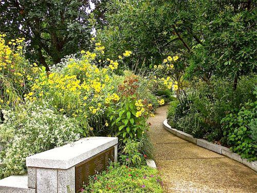 106 Best Butterfly Habitat Images On Pinterest | Butterfly House, Butterfly  Feeder And Butterfly Plants
