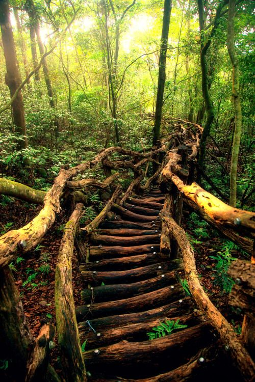 A path to the fairy tale