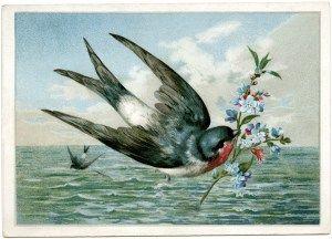 clipart do vintage pássaro, ramo levando pássaro, Cartão do pássaro impressão, pássaro voando sobre a ilustração de água, livre coisas efêmeras do vintage gráficos