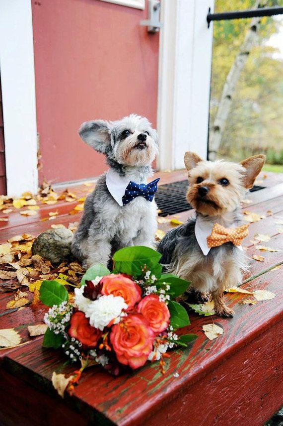 preciosos lazos para perros, animales en la boda