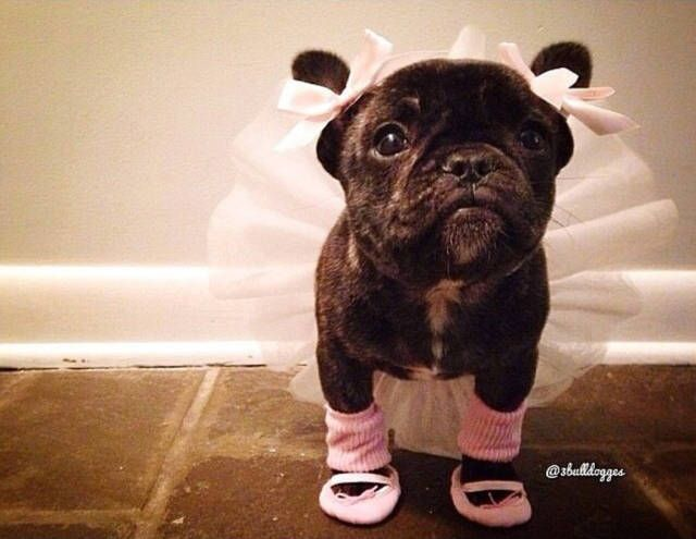 26 Pet Halloween Costumes So Cute You'll Cry