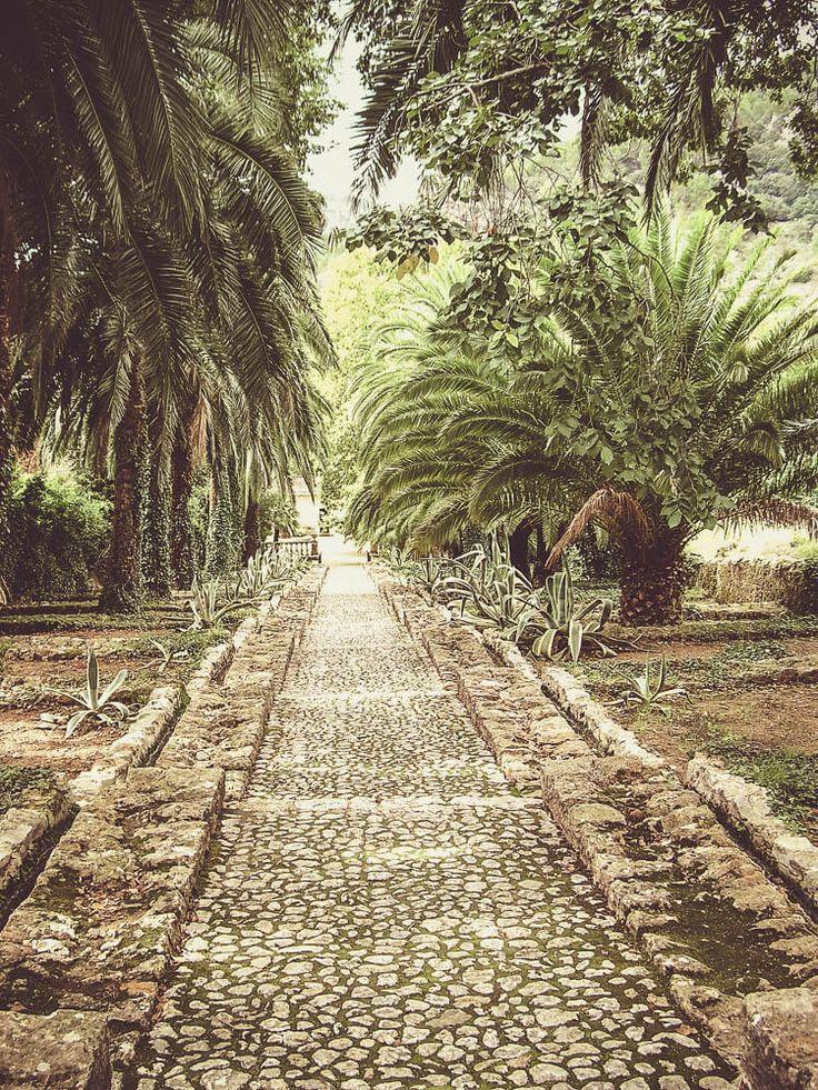 Der Zugang zu den Gärten von Alfàbia ist mit Phoenixpalmen gesäumt.