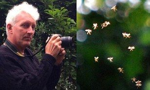 Man claims to have photographed real-life tiny fairies flying | Daily Mail Online