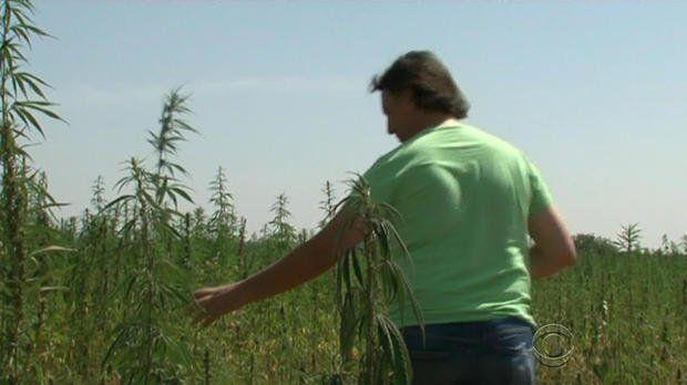 Farmers in #Italy fight soil contamination with cannabis     http://www.cbsnews.com/news/cannabis-plant-soil-decontamination-italy-vincenzo-fornaro … #MME #Hemp #cannabis #marijuana MME (@THEMMEXCHANGE) | Twitter