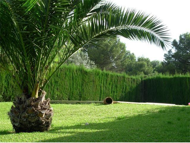M s de 25 ideas incre bles sobre tipos de palmeras en - Palmeras pequenas para jardin ...