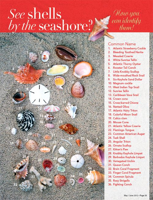 Virgin Islands This Week: Sea Shells: How you can identify them