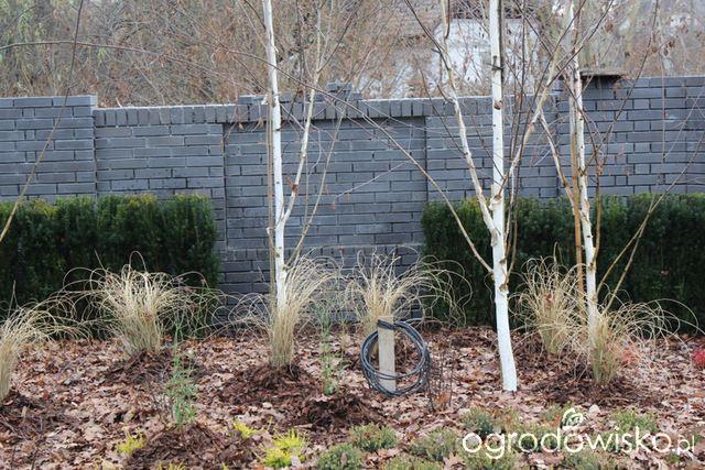 Ogród z lustrem - strona 113 - Forum ogrodnicze - Ogrodowisko