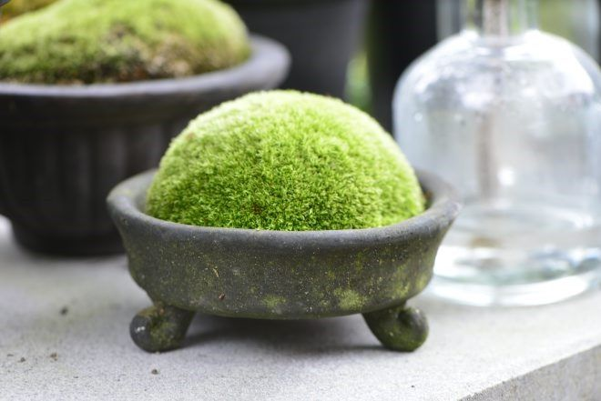 "This looks like some type of moss. I love moss.  It looks so touchable and ""comfy""."