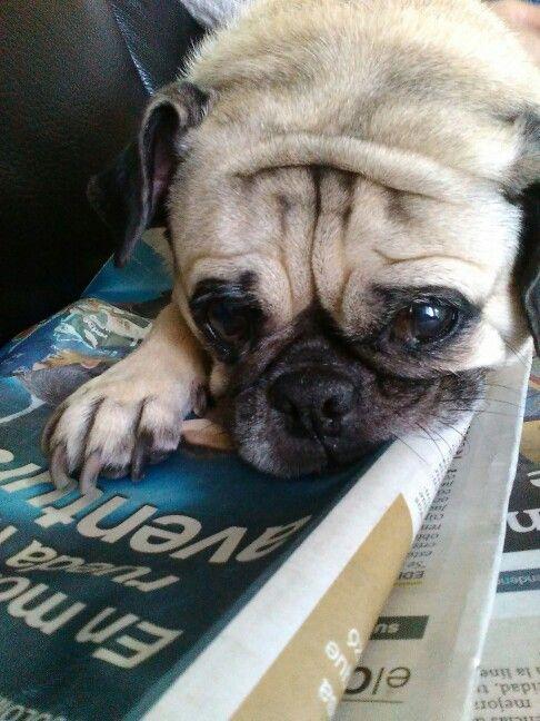 Leyendo la prensa