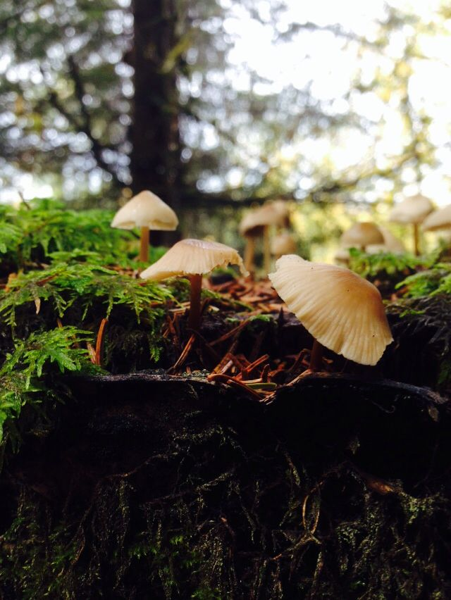 Trip to the forest in Elverum,Norway