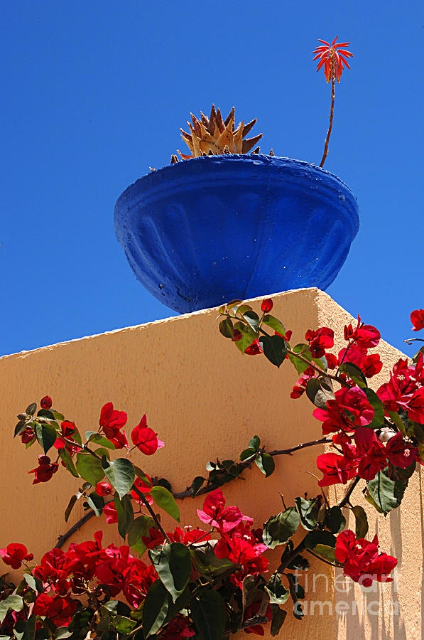 115 best blue skies images on pinterest blue skies summer vibes and beautiful - Flowers native to greece a sea of color ...