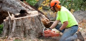 Finding the best Tree Root Grinder Services Milton Area