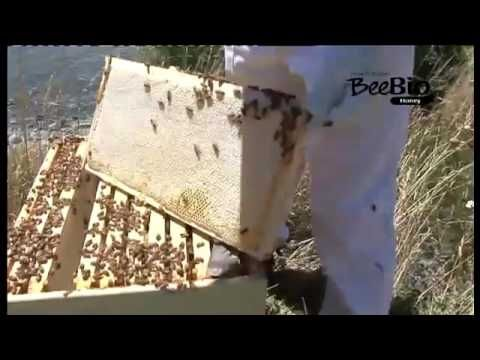 beebioskin.com Introduction to our Honey. 100% New Zealand Natural