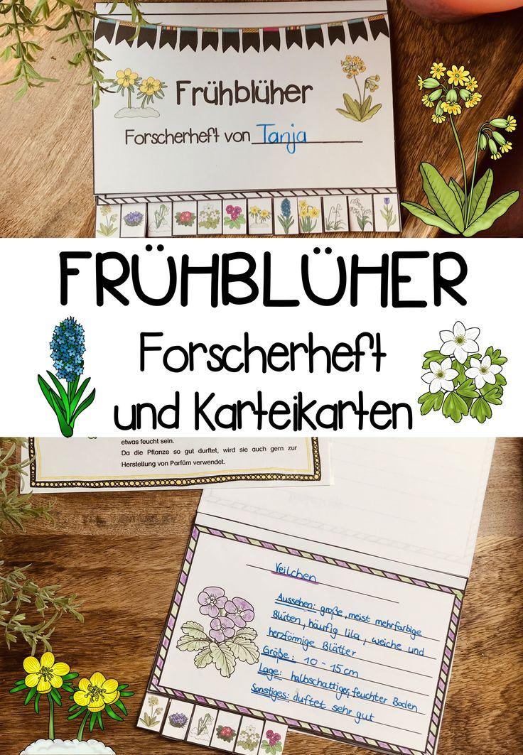 Frühblüher Forscherheft und Karteikarten – Deutsch, Sachunterricht