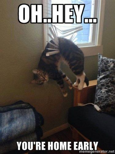Top 25 Funny cats stuck in Things