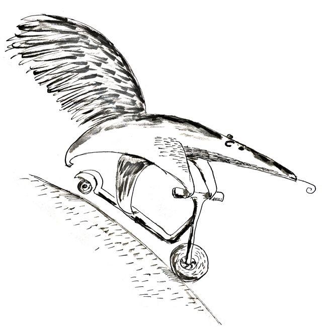 #anteater
