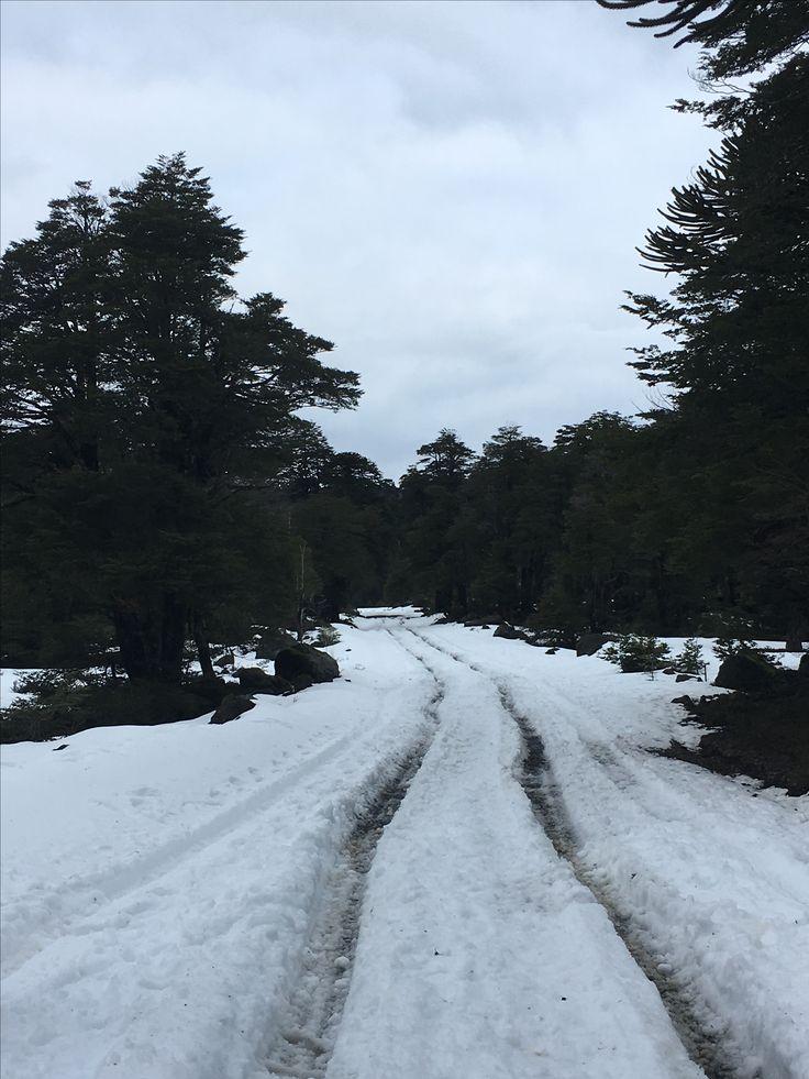 Parque Nacional Conguillio - Junio 2017