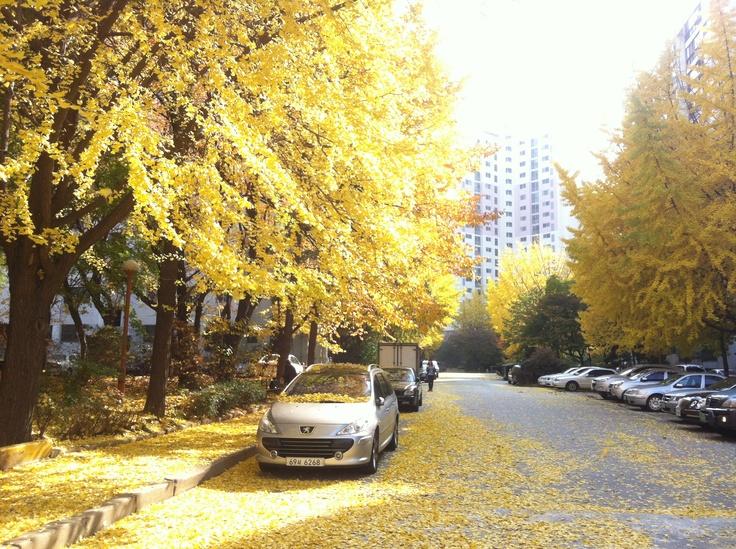 My apartment complex  this autumn