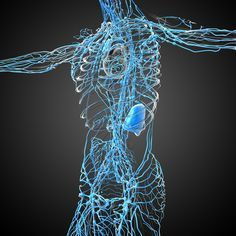 Dr. David Jockers explains what the lymphatic system is and why it is critical to support it when healing from cancer. Click on the image to learn 10 detoxification strategies which can help you improve your lymphatic system function.