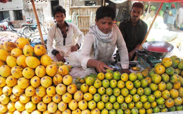 HYDERABAD: A vendor arranging mangos to attract the customers at his ...