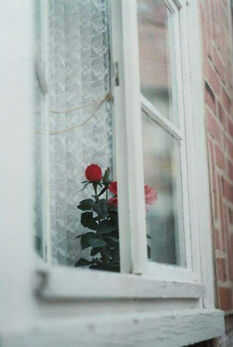 يا وردة طالّة من شباكها .. احكيلها عنى وعن حالى :')